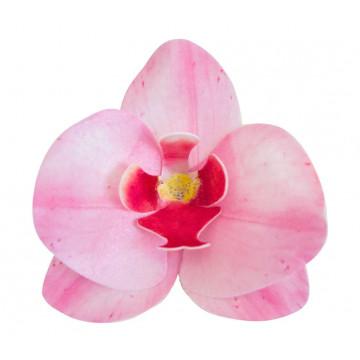 Storczyki waflowe - Rose...